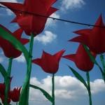 Ttiptoe through the tulips