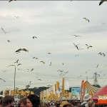 Gulls want food