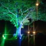 UV tree above Tipi field Saturday night