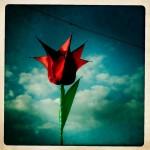 Flower - 2010
