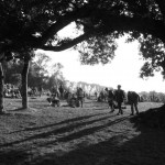 Evening at the stone circle field.