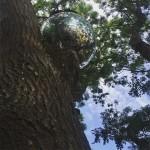 Disco Tree