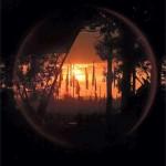 Sunset through The Glade