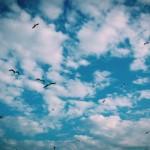Birds.