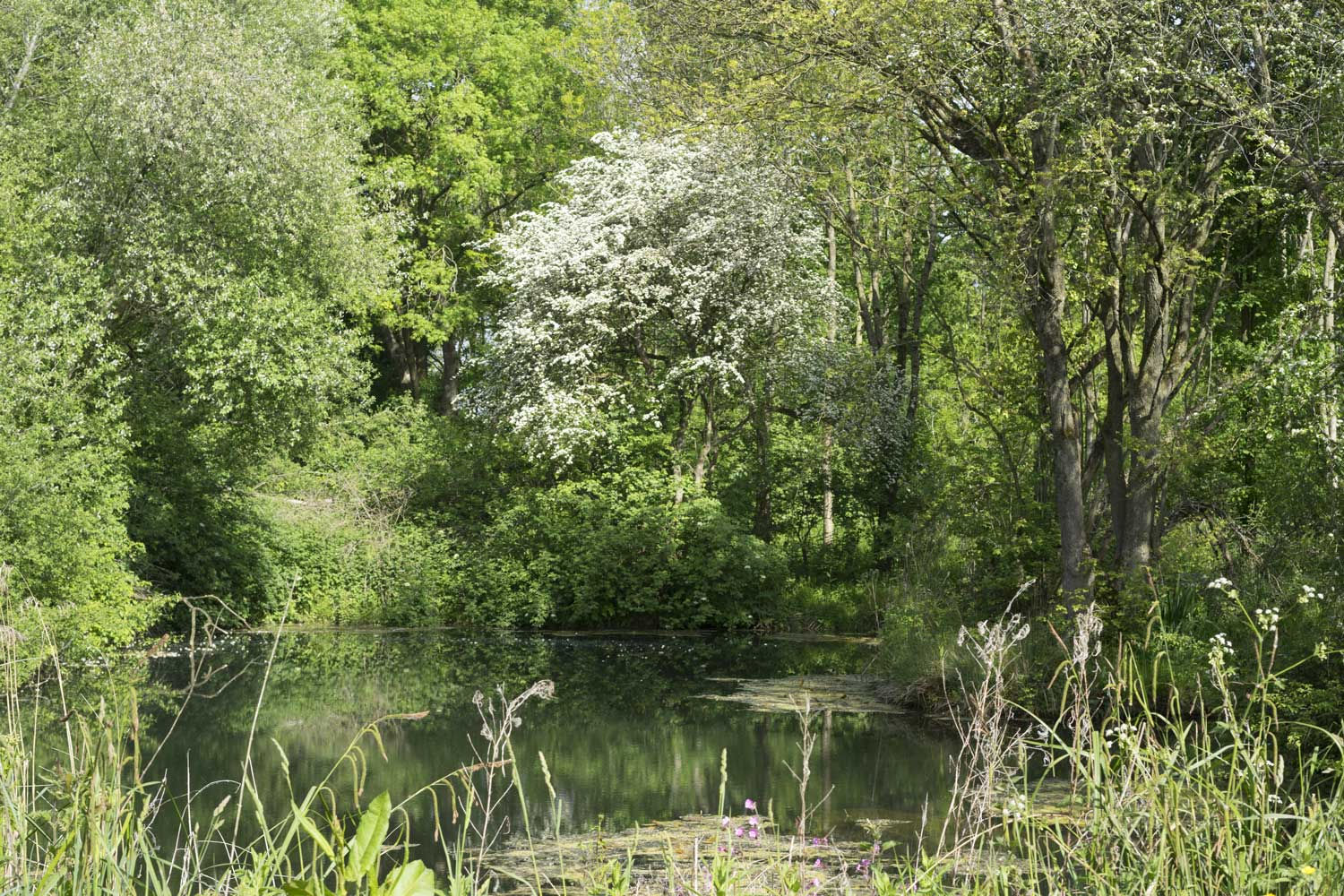 The-pond-in-the-wood
