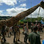 Giraffe fun