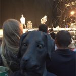 Sleaford Dogs watching Sleaford Mods